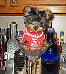 Vodka Dog